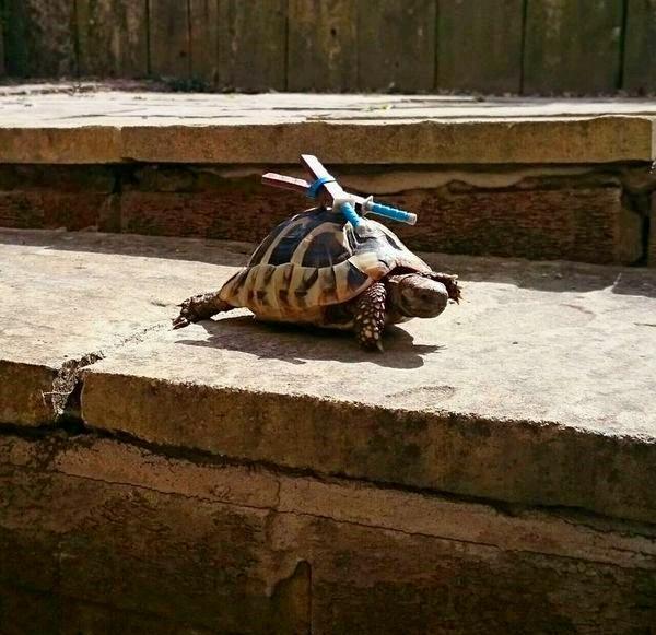Cosplay de las tortugas ninja