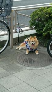 El perro con mas onda