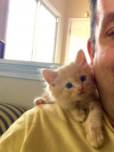 Gato al hombro
