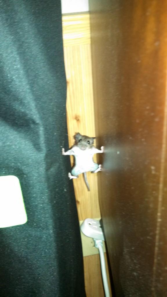 Modo Mision Imposible para un raton