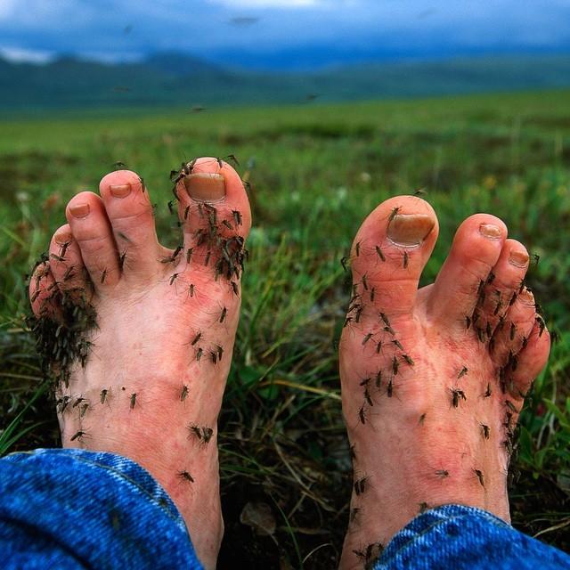muchos mosquitos